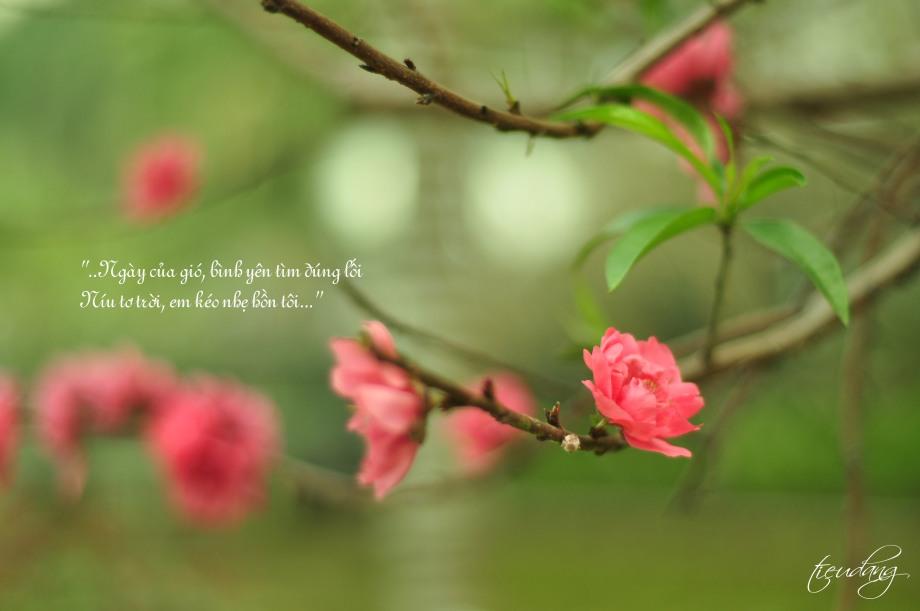 Ngày của gió bình yên tìm đúng lối